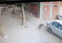 Собака напала на дитину