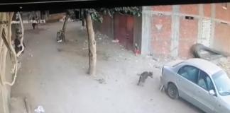 Собака напала на ребенка