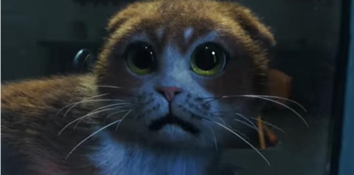 Напуганный кот
