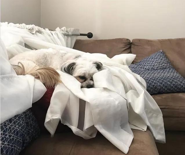 Мэгги сладко спит и ничем не парится