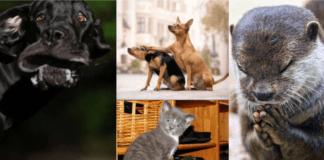 Лучшие фото домашних животных 2020 года