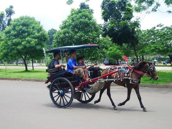 Вот такое конное такси