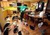Жінка прихистила у своєму будинку 1100 котів
