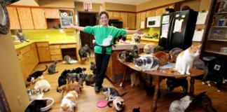 Женщина приютила в своем доме 1100 котов
