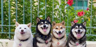 Собака знает, как выделиться из толпы