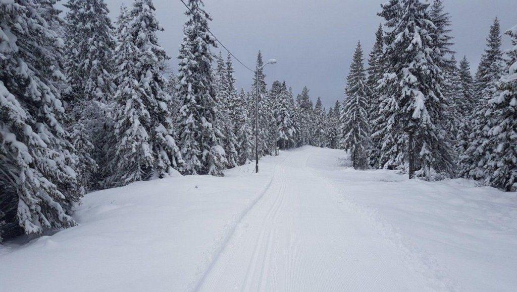 Карпаты в снегу