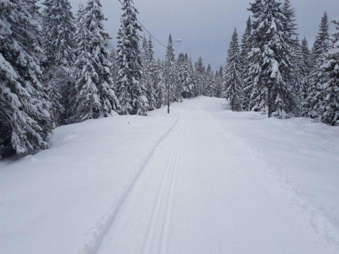 Карпати в снігу