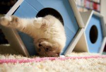 Веселые фото домашних котов