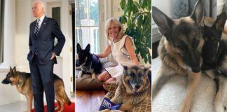 Собаки Джо Байдена дебютируют в Твиттере с огромным успехом