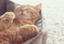 Вибираємо позу для сну