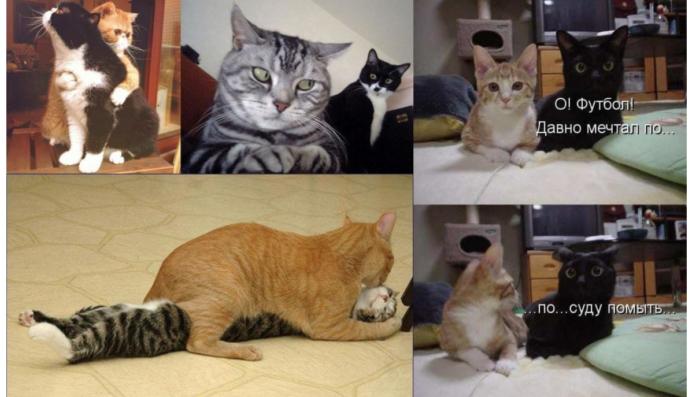 Фото котиків