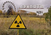 Чорнобильська зона знову дивує - знайдено рідкісну комаху, занесену в Червону Книгу України