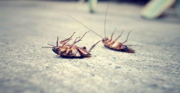 3 метода бороться с тараканами