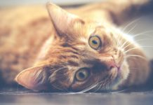 Чому варто завести кота