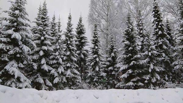 сніжна зима