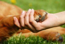 Гіпоалергенні собаки