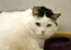Жирный кот из Беларуси