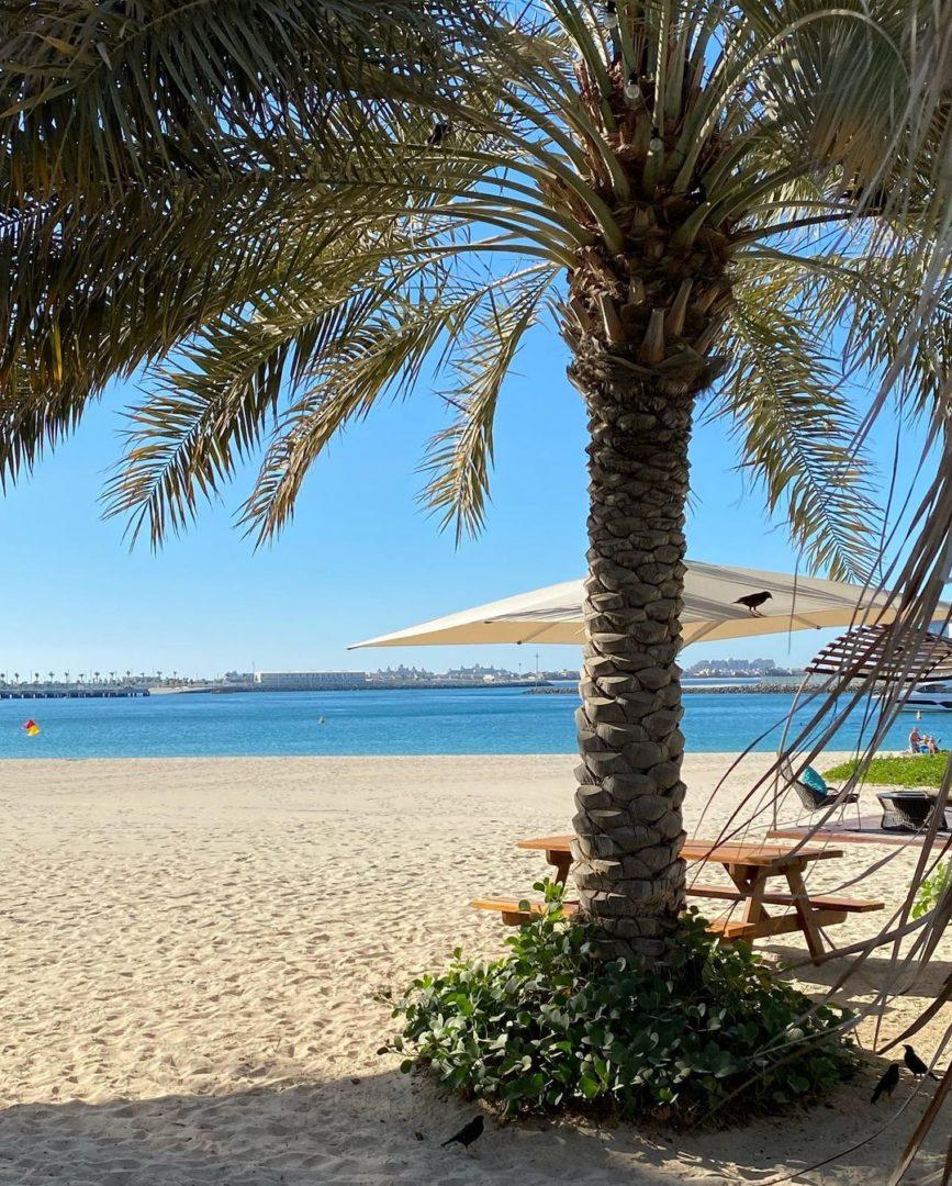 Пальма на пляжі, яка подобається Юрію Горбунову