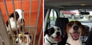 Животных забрали из приюта