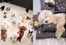 Как выглядит детский сад для собак?