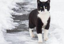 Кот листоноша