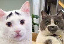 Кошки с необычным окрасом