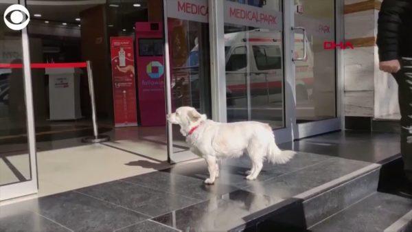 Бончук на входе в больницу