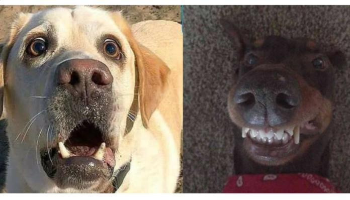 Смішні собаки
