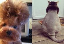 Самые смешные стрижки домашних животных