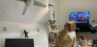 дивні котики