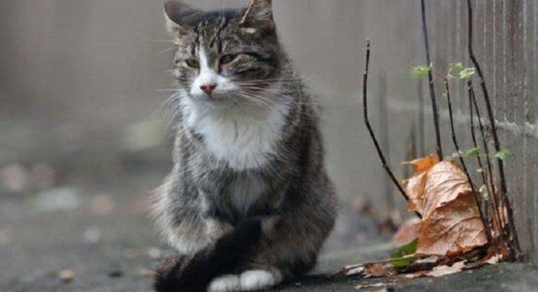 Кот не отходил от хозяйки даже после ее смерти