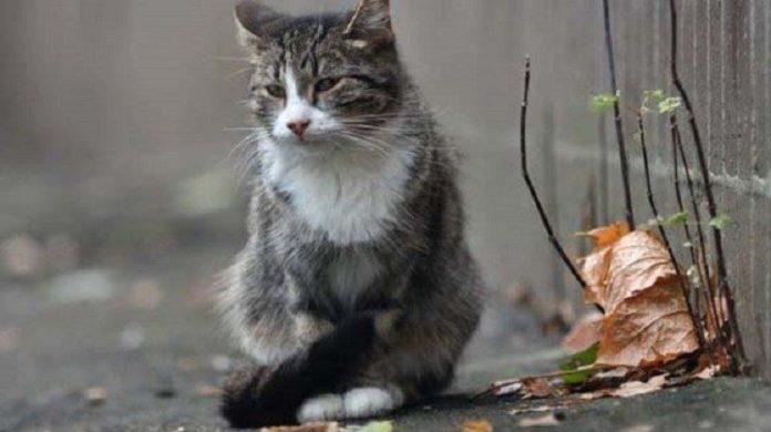 Кіт не відходив від господині навіть після її смерті