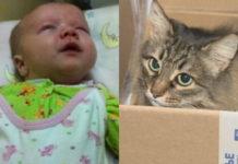 Бездомная кошка спасла жизнь маленькому ребенку