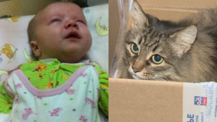 Бездомна кішка врятувала життя маленькій дитині
