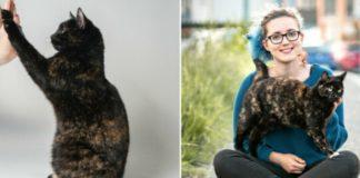 Сама розумна і талановита кішка на планеті живе в Австралії