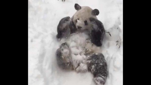 """""""Панди"""
