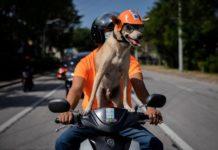 Собака-байкер