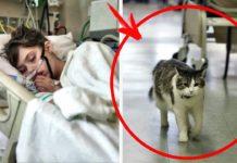 Кот-предсказатель