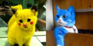 Дивовижні кошенята