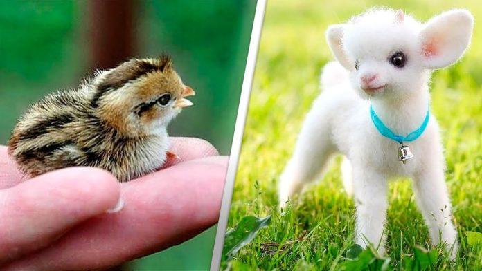 Милі дитинчата тварин