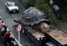 Самые большие животные мира