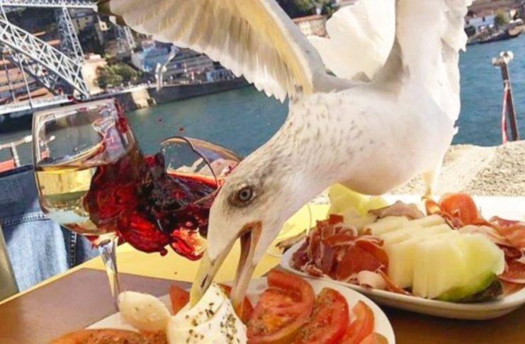 Реальная история - птица украла сэндвич из магазина и стала звездой сети (ФОТО)