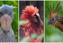 Странные птицы мира