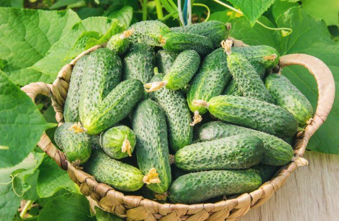 Яка ціна очікується на огірки в Україні?