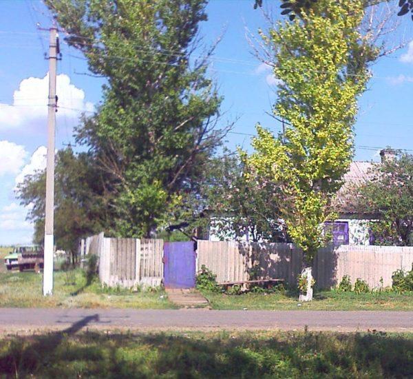 Тополь возле дома