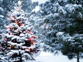 Зима 2021-2022 - какой будет погода на Новый год? Синоптики дали свой прогноз