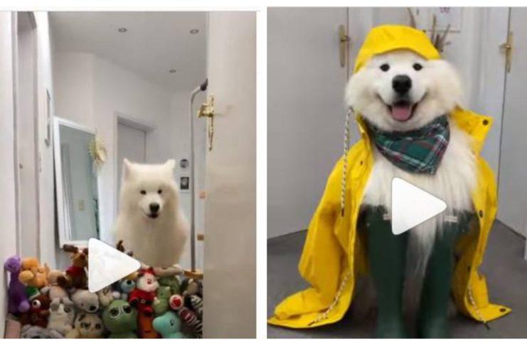 Необыкновенный пес!