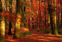 Очаровательный день в лесу