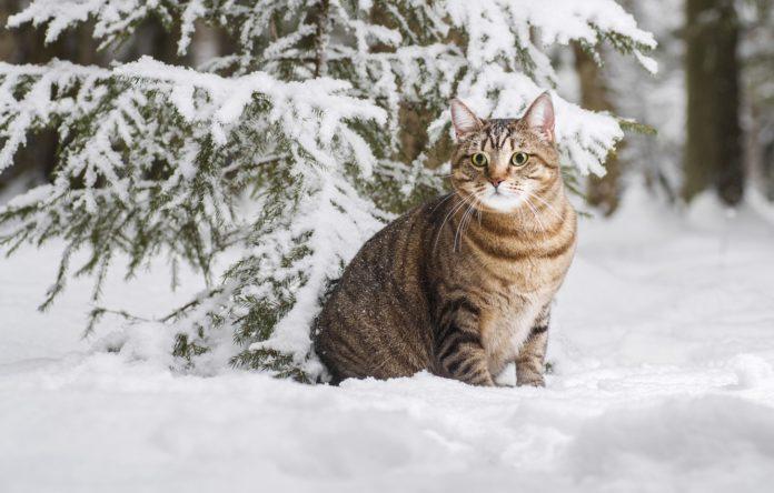 Зима 2022 сніжної - народний синоптик дав свій прогноз