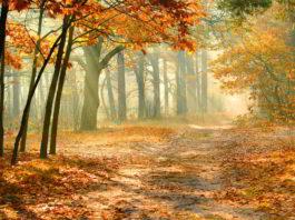 Осень!